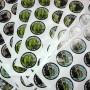 Round Sticker Printing Austrsalia
