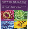 Full Colour Printed Rack Cards Online Australia